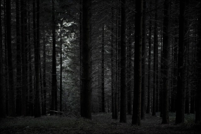 dense_and_gloomy_these_forests_make_a_scary_sight_640_46