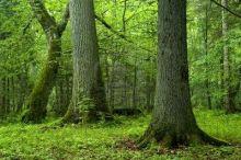 bosque-de-fuente-tilos-aleksander-bolbot